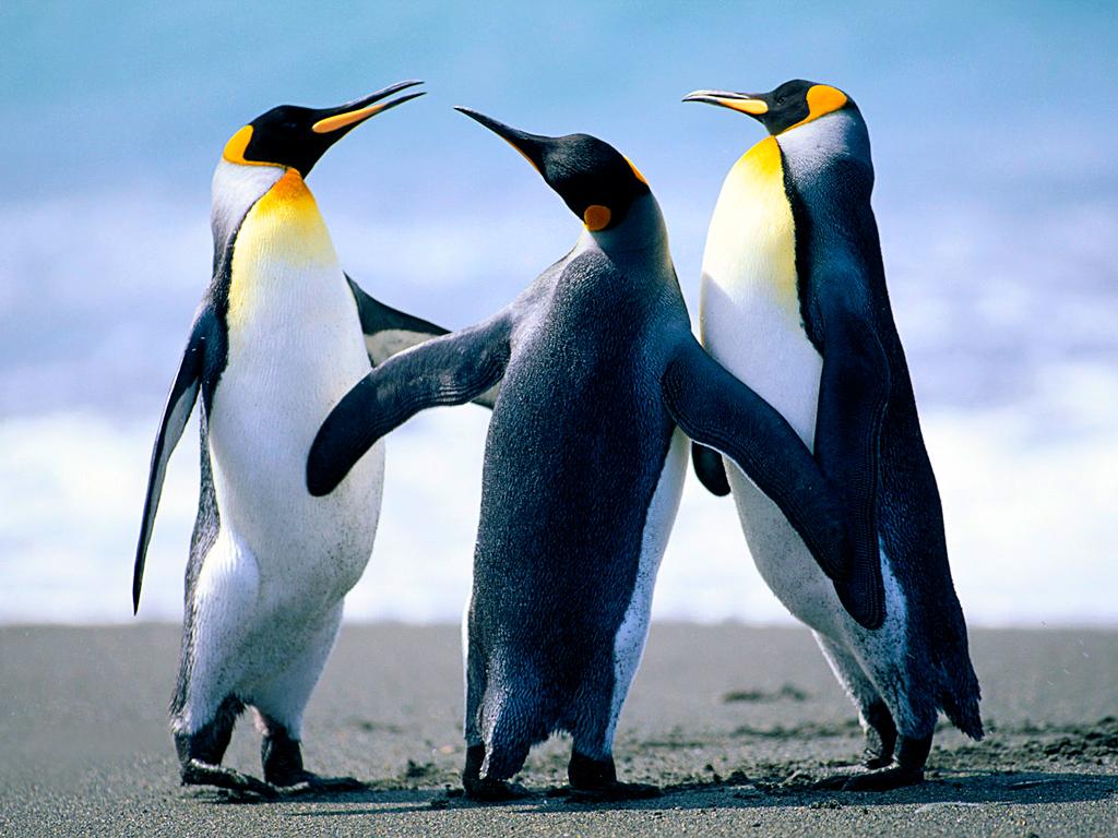 Click image for larger version  Name:Penguins.jpg Views:14 Size:759.6 KB ID:1960145