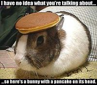 Click image for larger version  Name:bunny_pancake.jpg Views:316 Size:31.3 KB ID:1969461