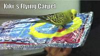 Click image for larger version  Name:kiki flying carpet.PNG Views:10 Size:877.0 KB ID:1974752
