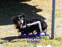 Click image for larger version  Name:Sammy Flying Field.jpg Views:105 Size:1.14 MB ID:2135032
