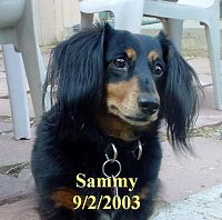 Click image for larger version  Name:SammySept 2, 2003.jpg Views:99 Size:85.1 KB ID:2135033