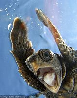 Click image for larger version  Name:turtle.jpg Views:157 Size:48.6 KB ID:2170506